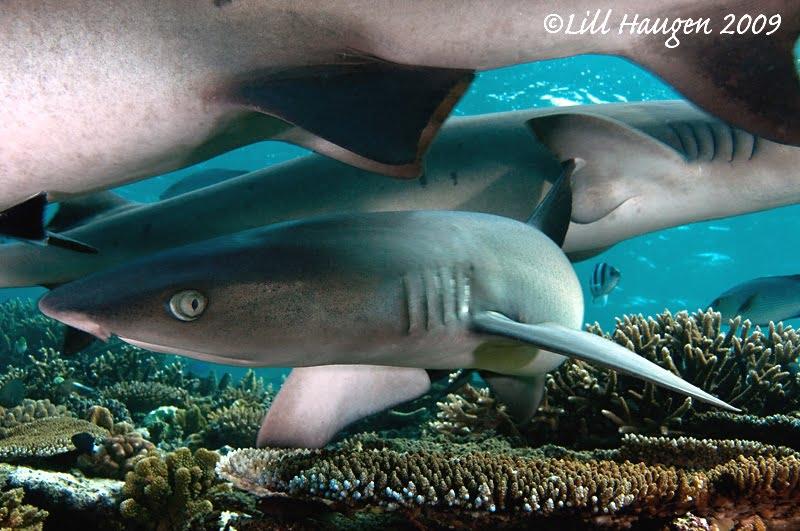 Shark Biology